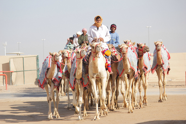 Camel Races in Dubai